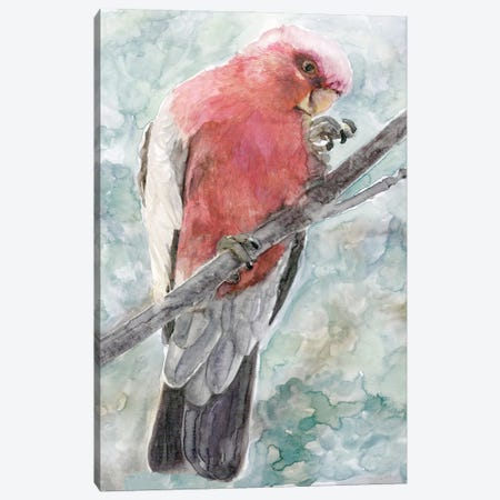 Tropic Parrot I Canvas Print #SLD292} by Stellar Design Studio Canvas Print