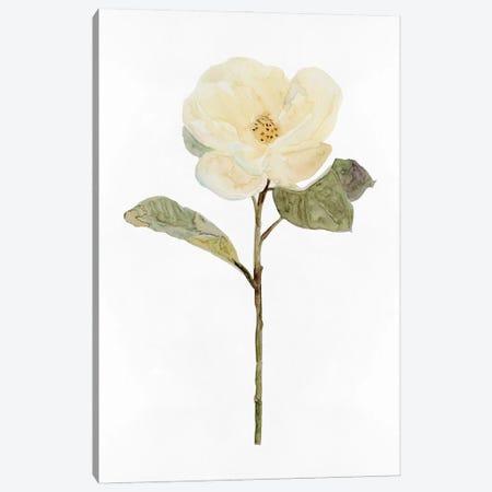 White Blossom II Canvas Print #SLD297} by Stellar Design Studio Canvas Wall Art