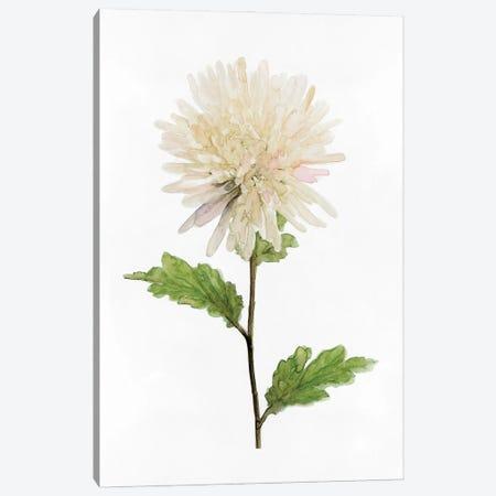 White Blossom IV Canvas Print #SLD299} by Stellar Design Studio Art Print