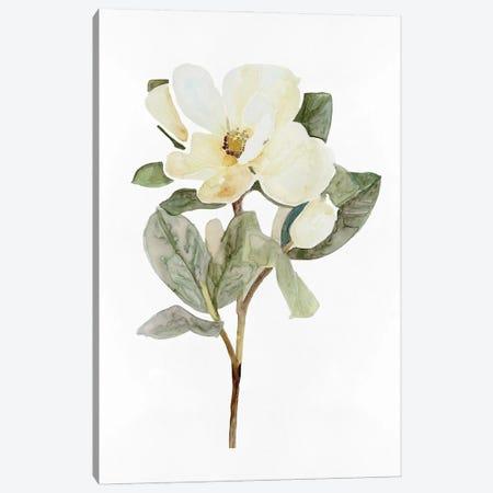 White Blossom VI Canvas Print #SLD300} by Stellar Design Studio Canvas Art Print
