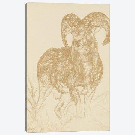 Big Horn Sketch Canvas Print #SLD323} by Stellar Design Studio Canvas Print
