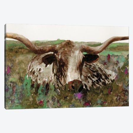 Texas Longhorn In Field Canvas Print #SLD368} by Stellar Design Studio Canvas Print