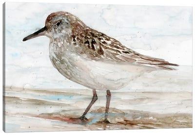 Sanibel Piper I Canvas Art Print