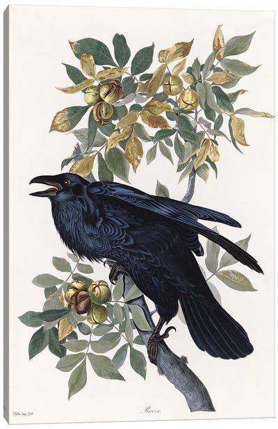 Vintage Crow II Canvas Art Print