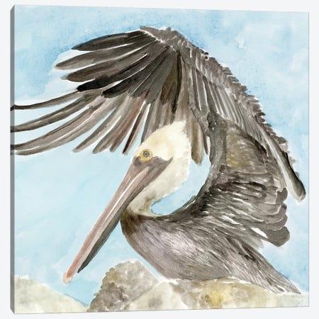 Soft Brown Pelican II Canvas Print #SLD44} by Stellar Design Studio Canvas Artwork