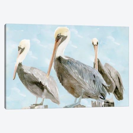 Soft Brown Pelican III Canvas Print #SLD45} by Stellar Design Studio Canvas Artwork
