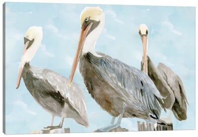 Soft Brown Pelican III Canvas Art Print