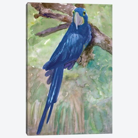 Blue Parrot I Canvas Print #SLD74} by Stellar Design Studio Canvas Print
