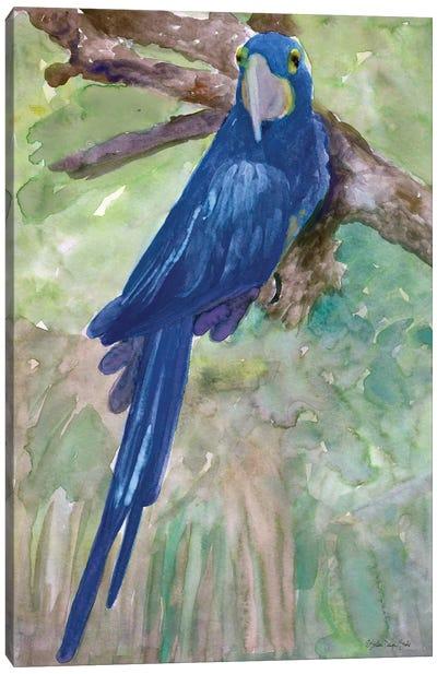 Blue Parrot I Canvas Art Print