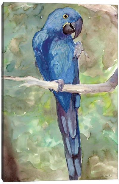 Blue Parrot II Canvas Art Print