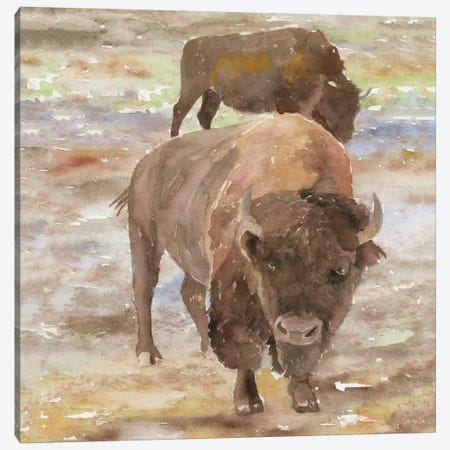 Great Buffalo Canvas Print #SLD93} by Stellar Design Studio Canvas Artwork