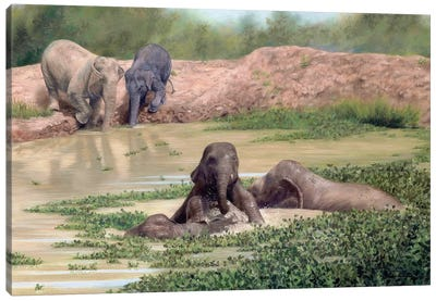 Asian Elephants Canvas Art Print