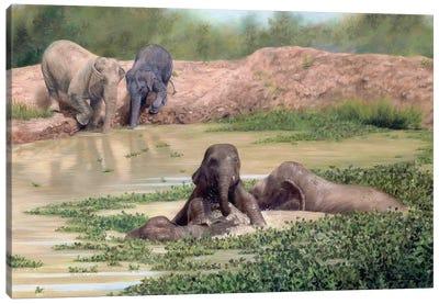 Asian Elephants Canvas Art Print