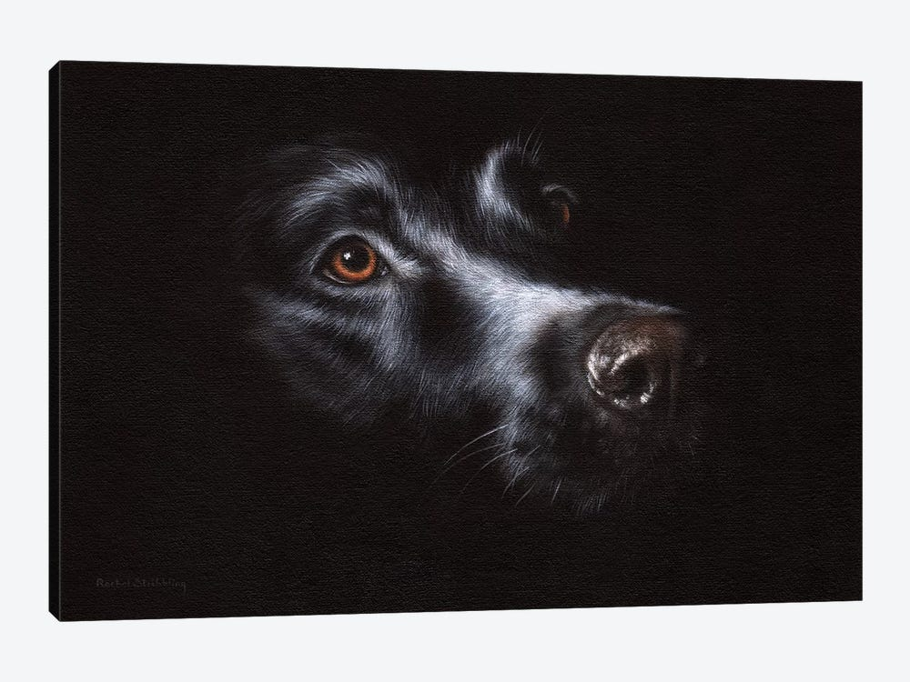 Black Labrador by Rachel Stribbling 1-piece Canvas Art