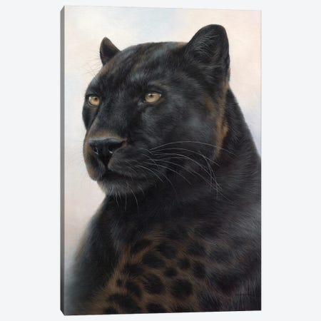 Black Leopard Canvas Print #SLG12} by Rachel Stribbling Art Print