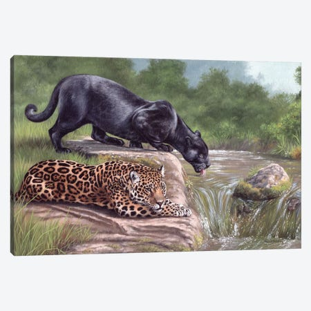 Black Panther And Jaguar Canvas Print #SLG13} by Rachel Stribbling Canvas Print