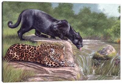 Black Panther And Jaguar Canvas Art Print
