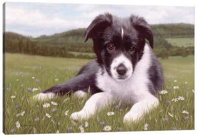 Border Collie Puppy Canvas Art Print