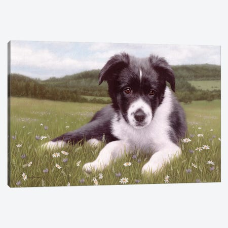 Border Collie Puppy Canvas Print #SLG14} by Rachel Stribbling Canvas Wall Art