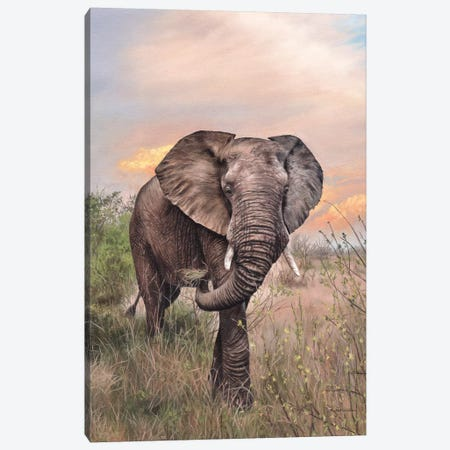 African Elephant Canvas Print #SLG1} by Rachel Stribbling Art Print