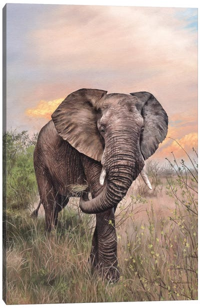 African Elephant Canvas Art Print