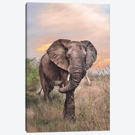 African Elephant Canvas Print #SLG1} by Rachel Stribbling Art Print