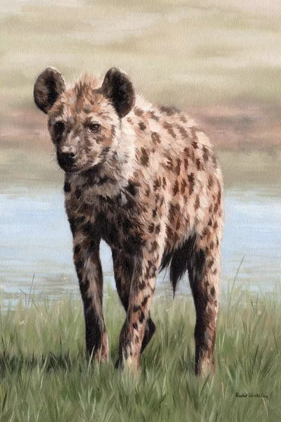 Hyena Canvas Print By Rachel Stribbling Icanvas