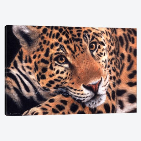 Jaguar Canvas Print #SLG23} by Rachel Stribbling Canvas Artwork