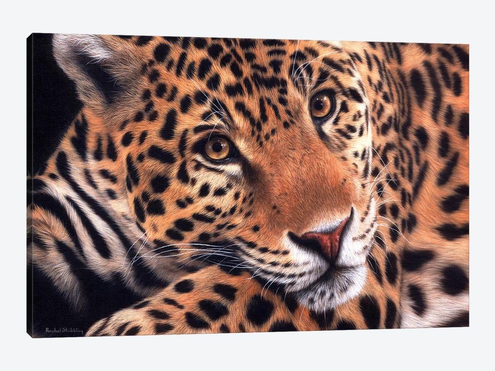 Jaguar by Rachel Stribbling 1-piece Canvas Print