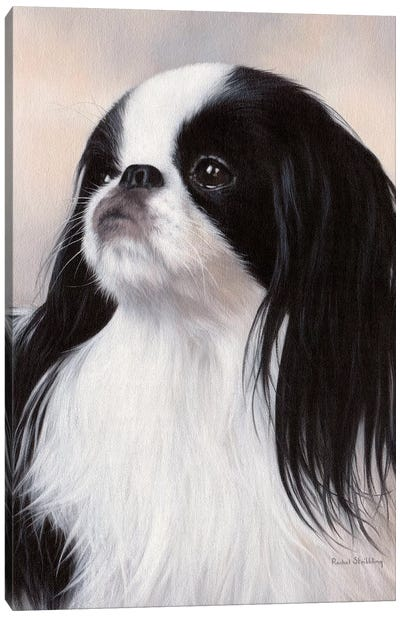 Japanese Chin Dog Portrait Canvas Art Print