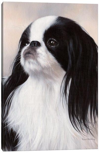 Japanese Chin Dog Portrait Canvas Art Print
