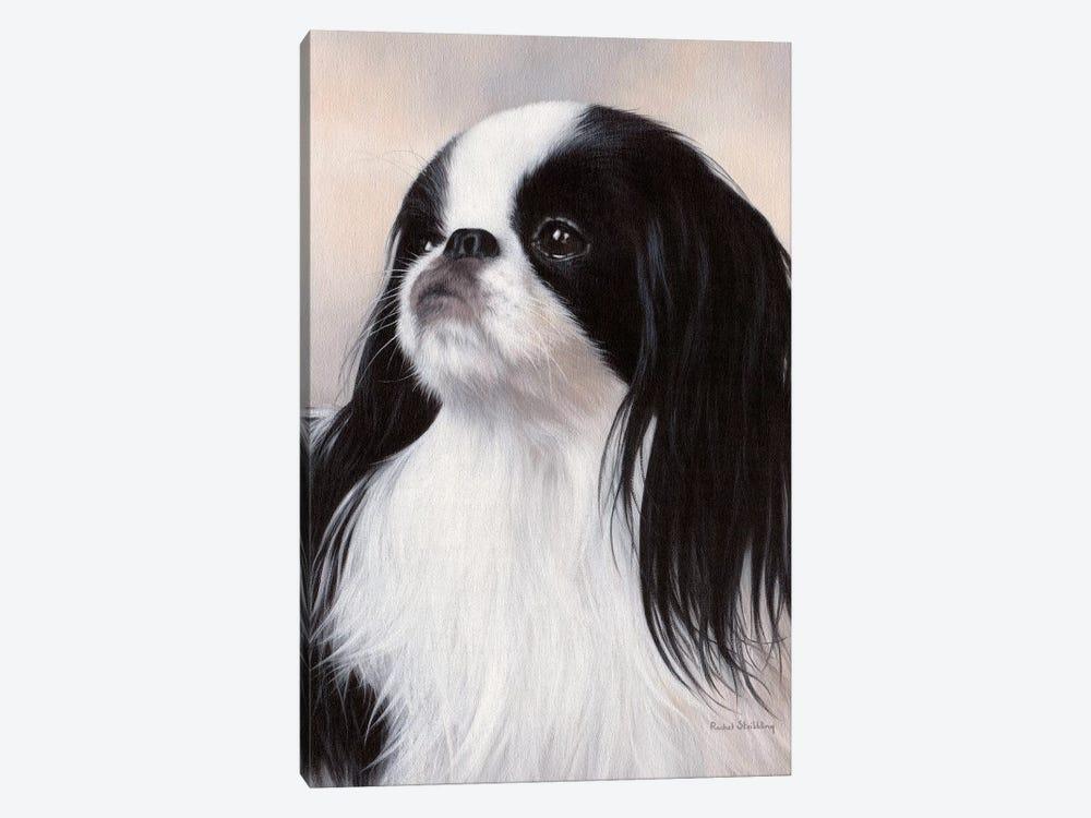 Japanese Chin Dog Portrait by Rachel Stribbling 1-piece Canvas Wall Art