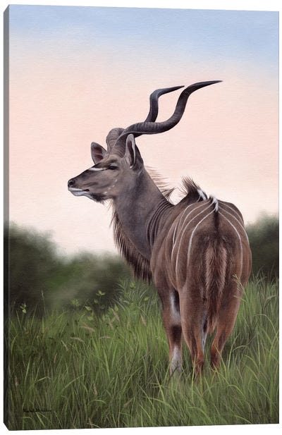 Kudu Canvas Art Print