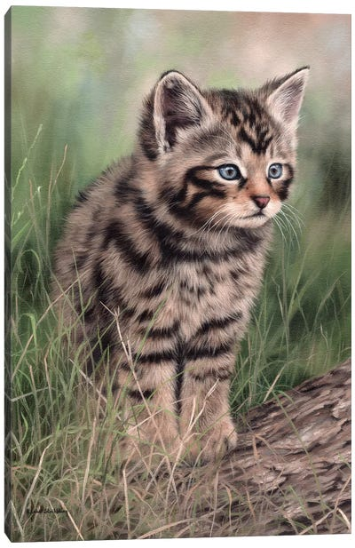 Scottish Wildcat Kitten Canvas Art Print
