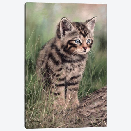 Scottish Wildcat Kitten 3-Piece Canvas #SLG26} by Rachel Stribbling Canvas Art Print