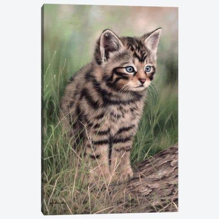 Scottish Wildcat Kitten Canvas Print #SLG26} by Rachel Stribbling Canvas Art Print