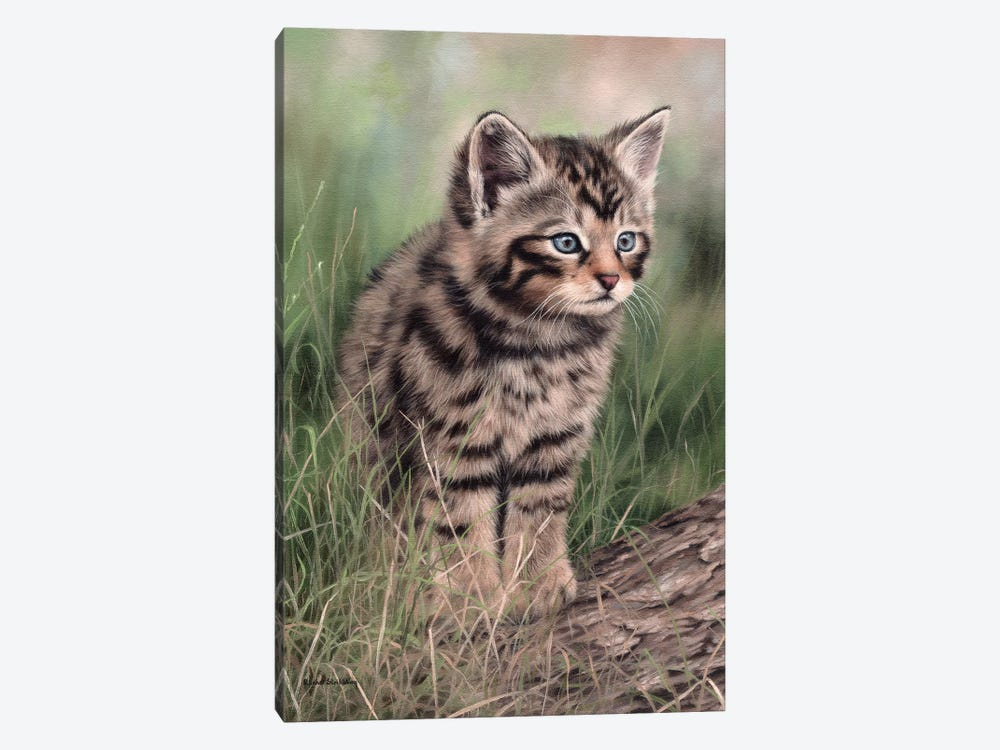 Scottish Wildcat Kitten by Rachel Stribbling 1-piece Canvas Artwork