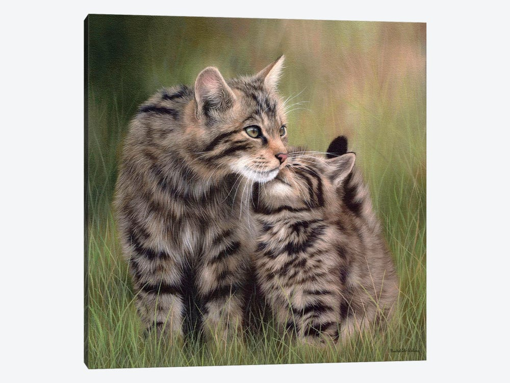 Scottish Wildcats by Rachel Stribbling 1-piece Canvas Art Print