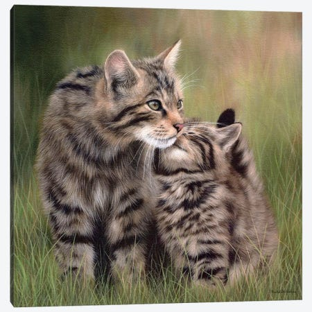 Scottish Wildcats Canvas Print #SLG27} by Rachel Stribbling Art Print