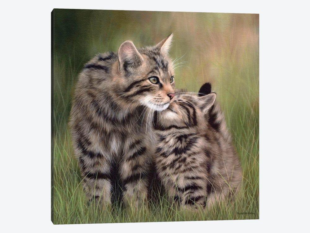 Scottish Wildcats by Rachel Stribbling 1-piece Canvas Art Print