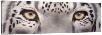 Snow Leopard Eyes Canvas Art Print
