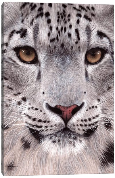 Snow Leopard Face Canvas Art Print