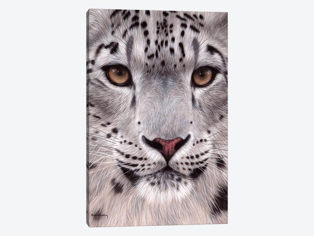Snow Leopard Face by Rachel Stribbling 1-piece Art Print