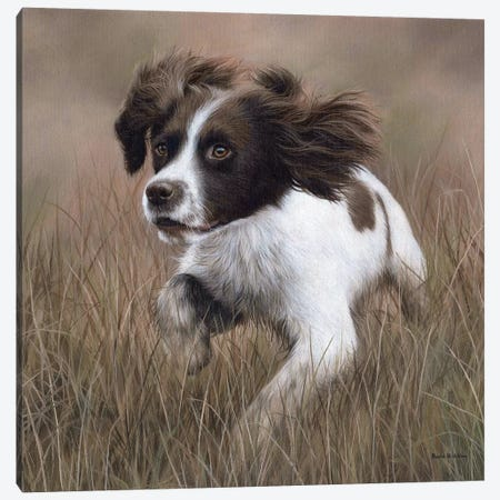 Springer Spaniel Canvas Print #SLG31} by Rachel Stribbling Canvas Art Print