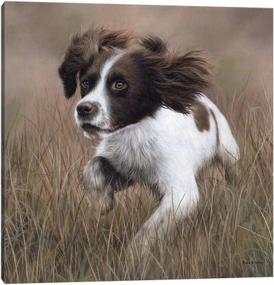 Springer Spaniel Canvas Art Print