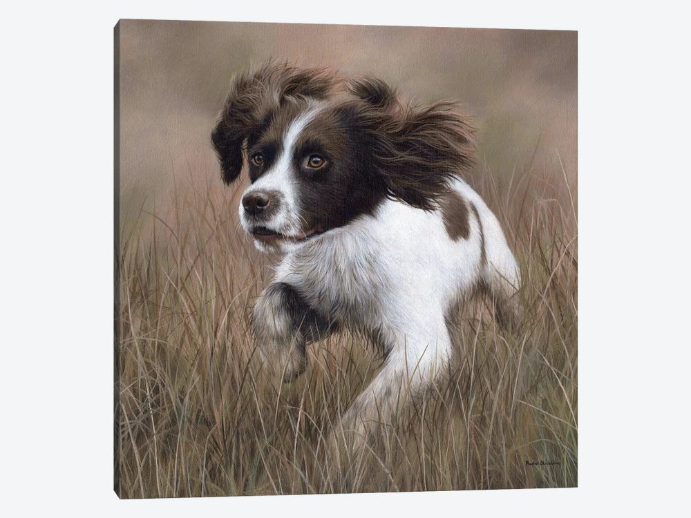 Springer Spaniel by Rachel Stribbling 1-piece Canvas Artwork