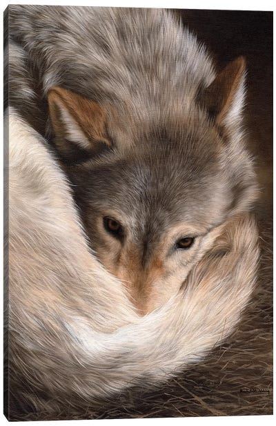 Timber Wolf Canvas Art Print