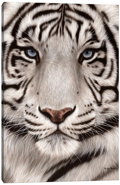 White Tiger Face Canvas Art Print