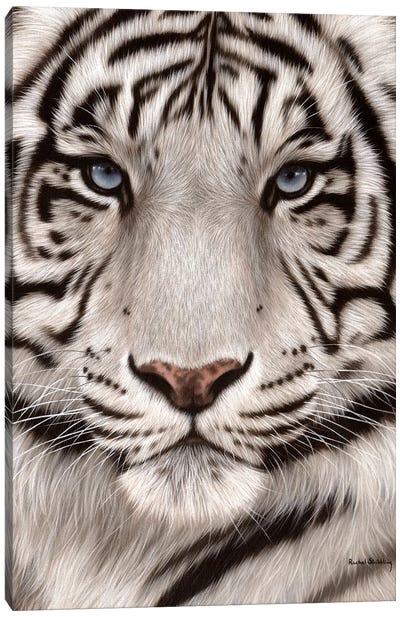White Tiger Face Canvas Art Print