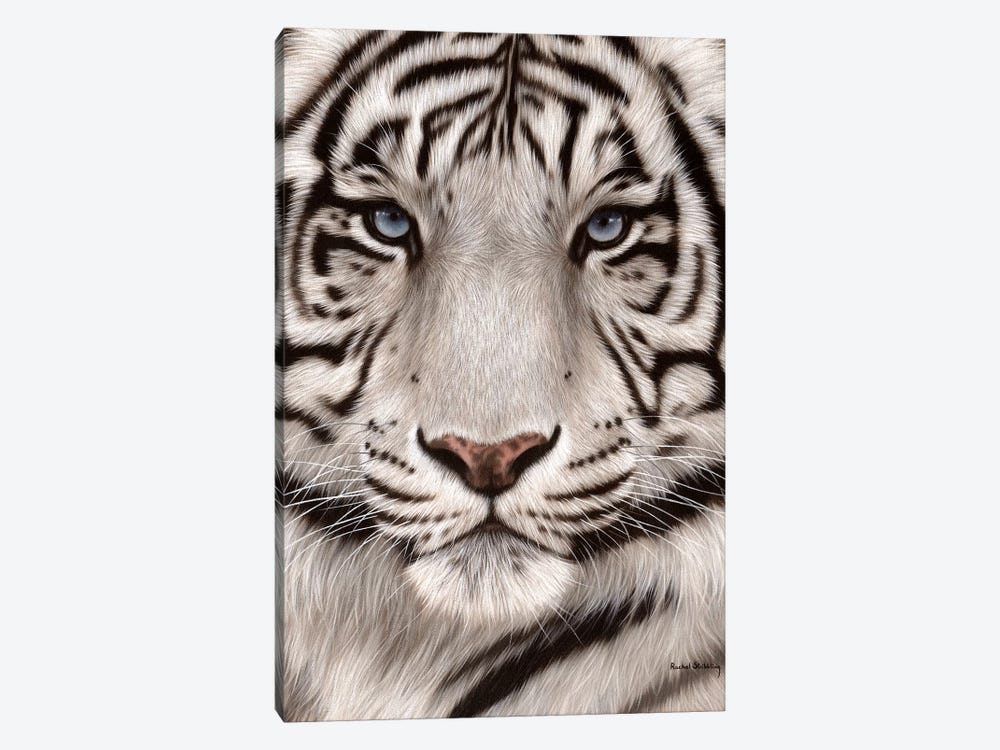 White Tiger Face by Rachel Stribbling 1-piece Art Print